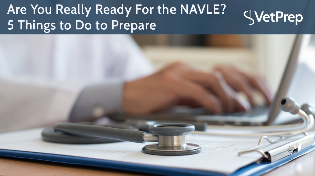Are-You-Really-Ready-For-the-NAVLE--5-Things-to-Do-to-Prepare