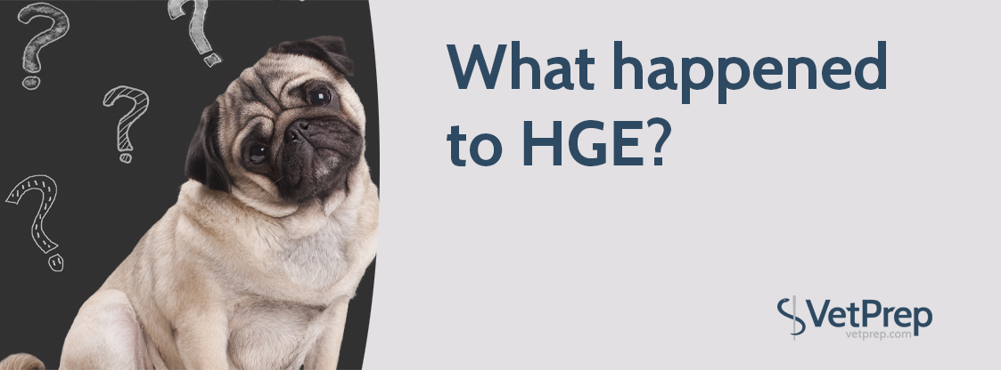 BlogHeader-What-happened-to-HGE