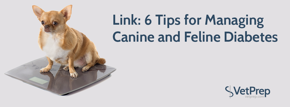LINK-6-tips-for-managing-canine-and-feline-diabetes