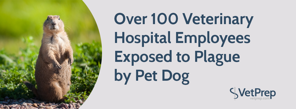 Over-100-Veterinary-Hospital-Employees-Exposed-to-Plague-by-Pet-Dog