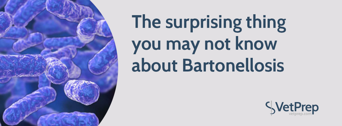 The-surprising-thing-you-may-not-know-about-Bartonellosis