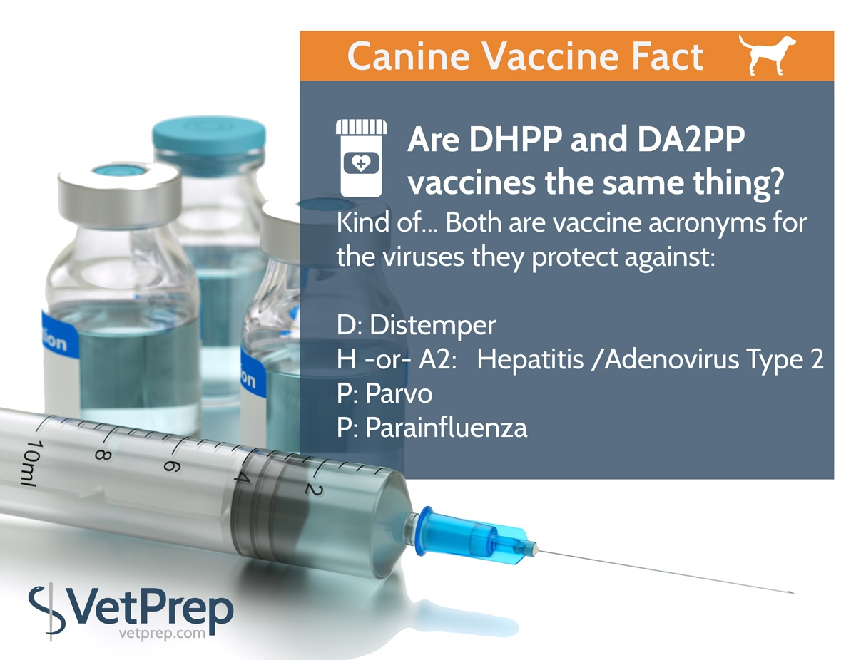 VP-FACT-canine-vaccine3.jpg