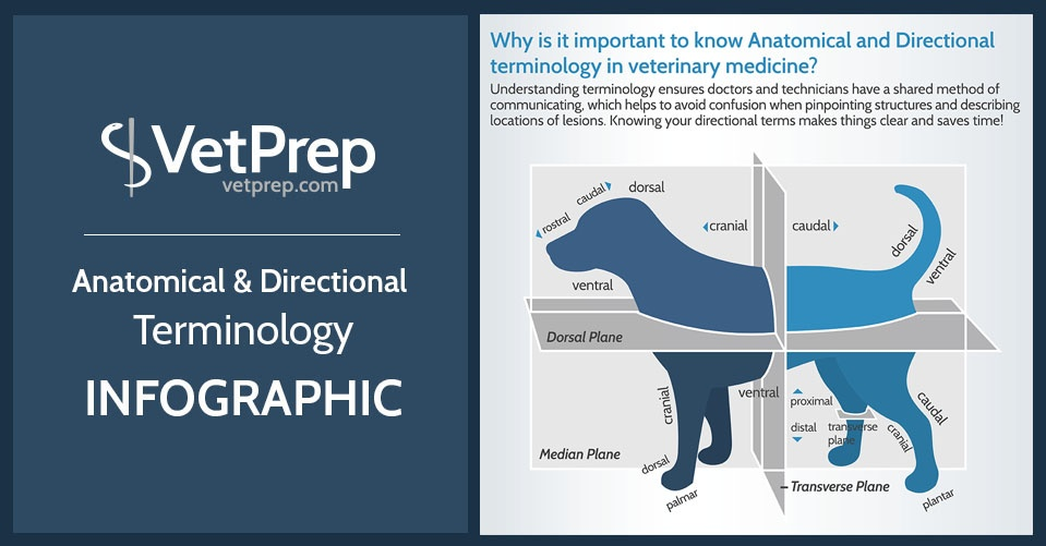 Anatomical And Directional Terminology In Veterinary Medicine